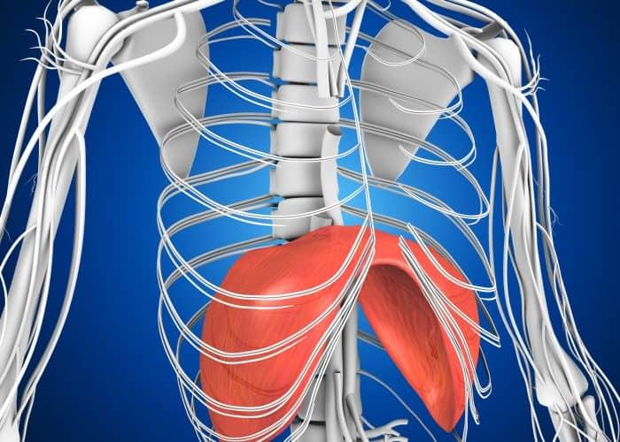 Diaphragm | Breathing Issue |Osteopath | Balwyn