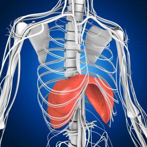 Diaphragm   Breathing Issue  Osteopath   Balwyn
